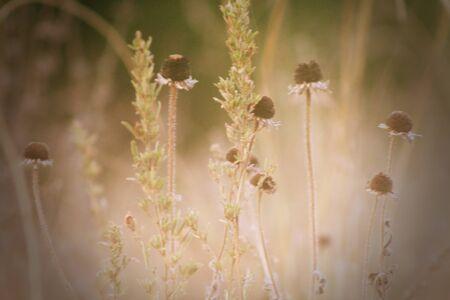 Dying Flowers Banco de Imagens - 94915727