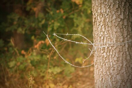 Barbed Wire around Tree