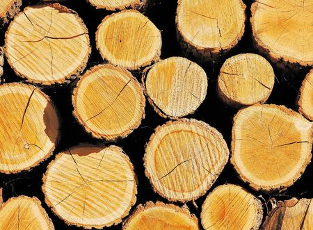 Pile of wooden logs Stock Photo - 13827363