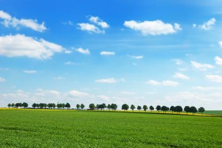유채 필드와 녹색 초원 흐린 푸른 하늘에 대 한 나무의 파노라마보기
