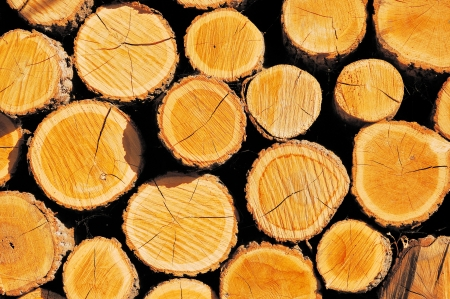Pile of wood cut for fireplace Stock Photo - 13848060