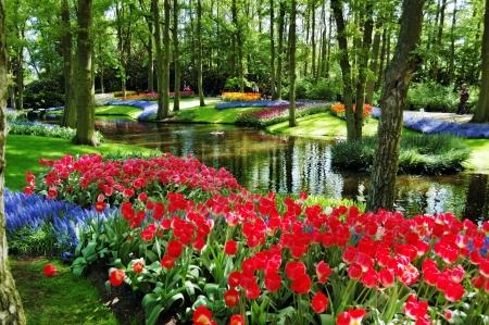 lisse: Kleurrijke bloemen en bloesem in het nederlands lentetuin Keukenhof Lisse, Nederland