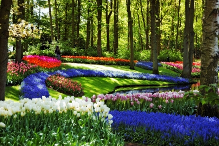 Colorful springflowers and blossom in dutch spring garden Keukenhof  Lisse, Netherlands  photo