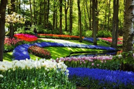 lisse: Kleurrijke springflowers en bloeien in het Nederlands het voorjaar de tuin Keukenhof Lisse, Nederland