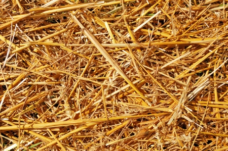 Abstract background of ground covered with mowed wheat ears and straw