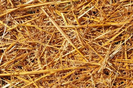 Abstracte achtergrond van de grond bedekt met gemaaid tarwe oren en stro