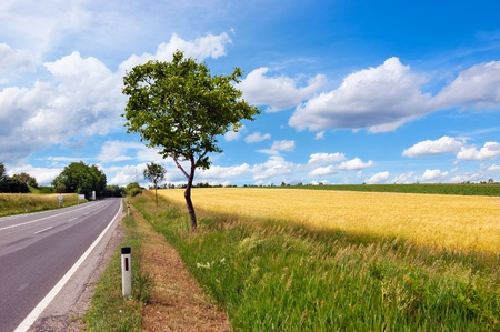 Empty countryside road among trees and fields at summer day before thunderstorm Stock Photo