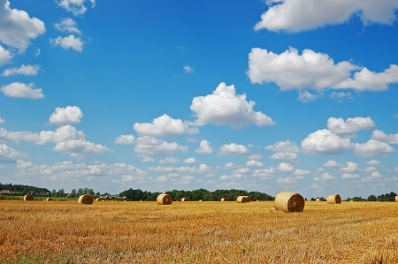Golden field with round hay bales against a picturesque cloudy sky on a perfect sunny day photo