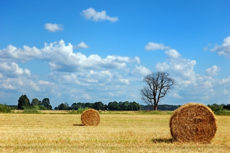 Golden field with round hay bales and dead tree against a picturesque cloudy sky on a perfect sunny day photo