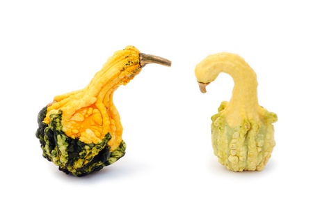 unusually: Unusually shaped fruit of an autumn squash isolated on white