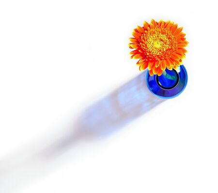 Top view of orange gerbera flower in blue bottle throwing a shadow on a white background Stock Photo