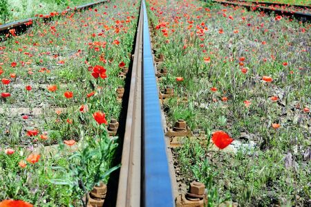 Wild red poppies near railway. Nature and industry concept.