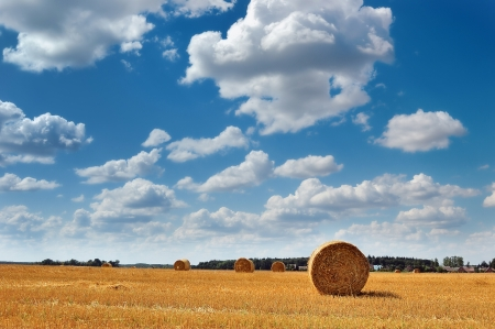 corn stalk: Golden field with round hay bales against a picturesque cloudy sky on a perfect sunny day