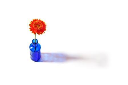 Orange gerbera flower in blue bottle throwing a shadow on a white background Stock Photo - 14659632
