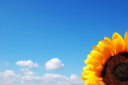 Sunflower on a background of the cloudy blue sky Stock Photo - 14659645