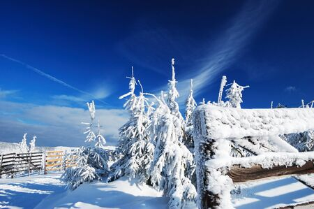 Image of beautiful winter day with snow-covered fir trees and frosty wooden fence photo