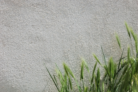 Light grey plastered wall with a grass on foreground