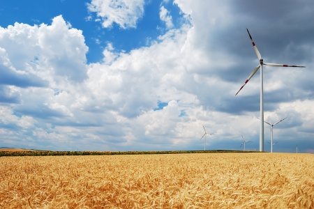 Wind turbines in sunflowers and wheat field photo