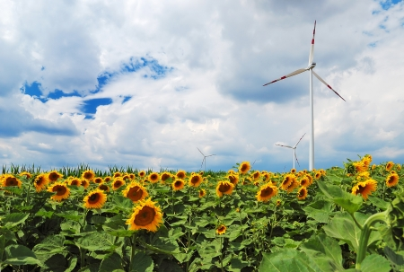 wind power plant: Field of sunflowers and wind turbine