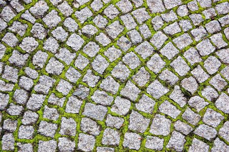 Cobblestone pavement with moss growing between stones photo