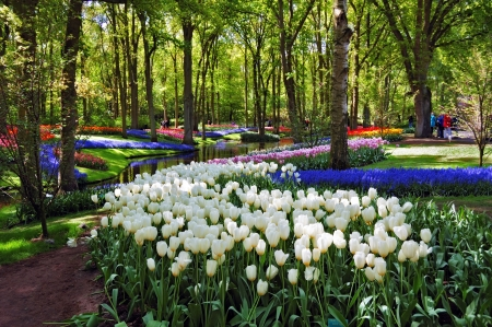 Colorful springflowers and blossom in dutch spring garden Keukenhof  Lisse, Netherlands