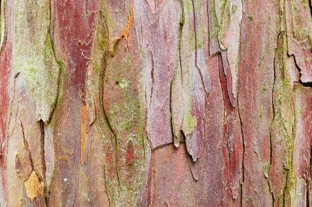 자연이 나무 껍질 추상적 인 배경 스톡 콘텐츠