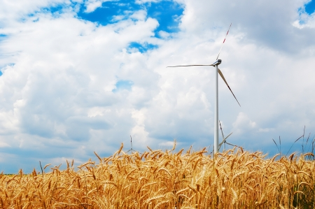 Wind turbines in a golden wheat field photo