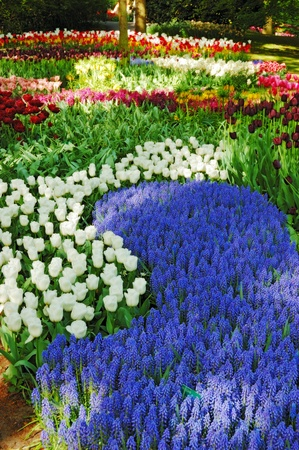 marvellous: Colorful flowers and blossom in dutch spring garden Keukenhof (Lisse, Netherlands)