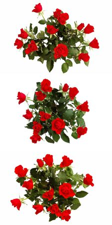 roseleaf: Dozen of scarlet roses isolated on white. Set of three pictures.