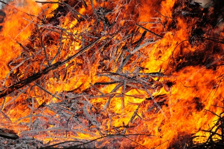 brushwood: Flame texture  Fire from large heap of burning wood
