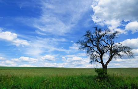 branchy: Branchy dead tree against a picturesque cloudy sky Stock Photo
