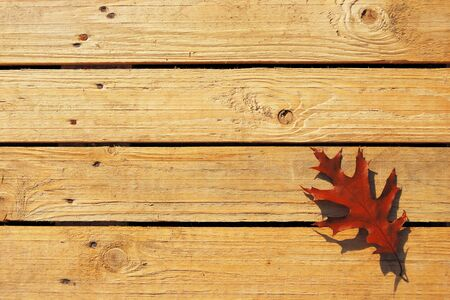 chink: Rough wooden boarding with dry oak leaf