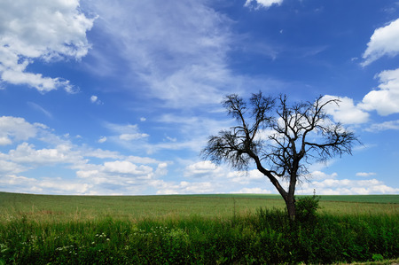 Summer landscape with branchy dead tree in the green meadow against a picturesque cloudy sky on a perfect sunny day Stock Photo