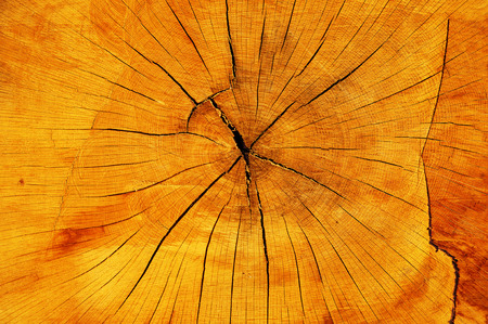 Close-up view of old cracked  trunk cut showing growth rings