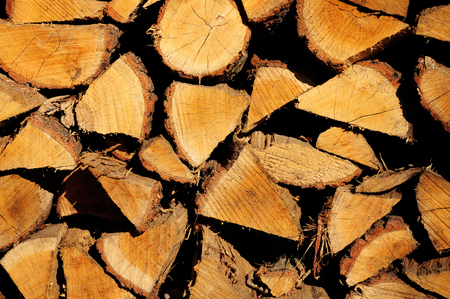 Pile of wood cut for fireplace lit by evening sunlight