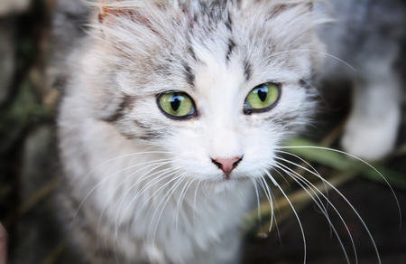 Charming green-eyed cat look at the viewer Banco de Imagens