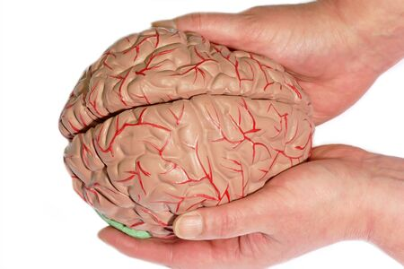 Human Brain holded by two hands photo