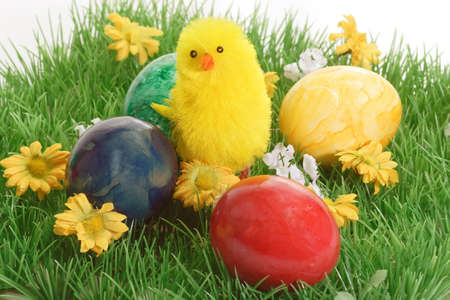 incubate: Easter chicks with Easter Eggs in green Grass