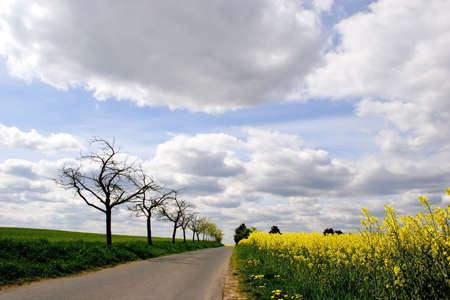 oilseed: A path through a bright Canola Field