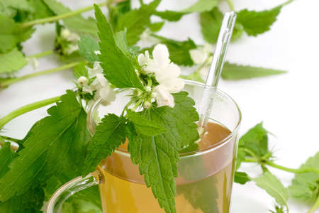 Close up of a stinging nettle tea on bright background photo