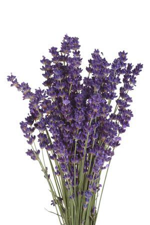 Bos van bloeiende lavendel op lichte achtergrond