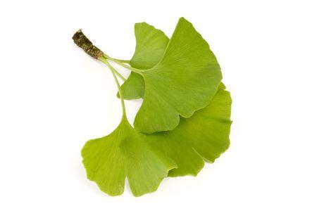 Three fresh ginkgo leaves - isolated on white background