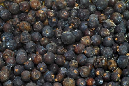 Juniper seeds as background. Shot in studio. photo