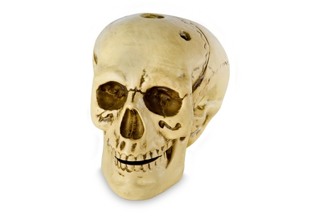 modell: Human skull modell isolated with clipping path on white background