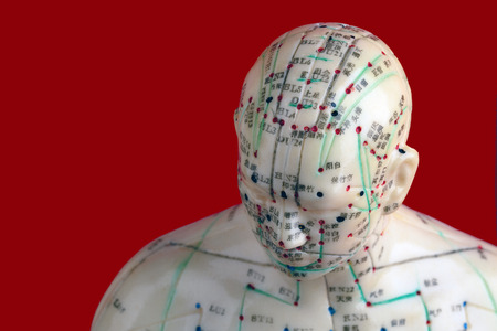 Acupuncture Model isolated on red background