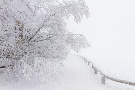 Winter scenery with snow and frost covered trees.