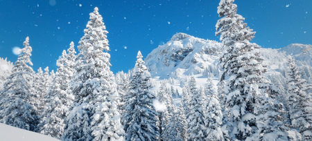 Winter scenery with snowy forest and high moutain.