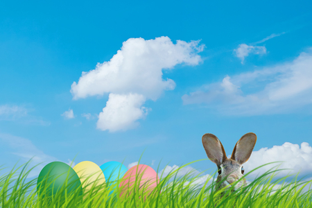 Hidden easter rabbit and easter eggs in a meadow with blue sky. Zdjęcie Seryjne
