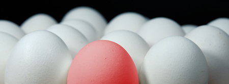 Many white eggs in a row and one red egg in between. Zdjęcie Seryjne