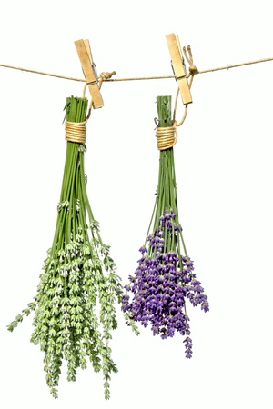 Two bunches of lavender flowers on line